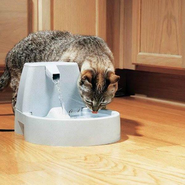 Автопоилка для кошек и котов: разновидности автоматической поилки и особенности выбора питьевого фонтанчика