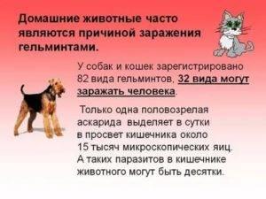 Как передаются глисты от собак к человеку, их виды