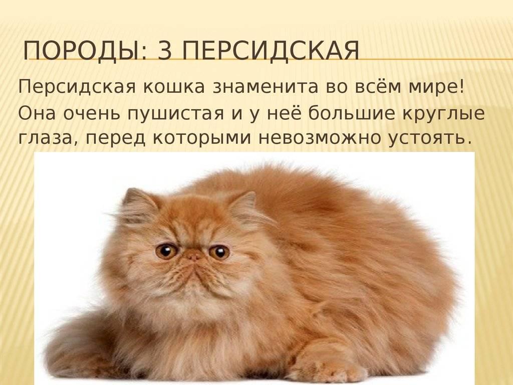 Сколько лет по статистике живут персидские кошки в домашних условиях