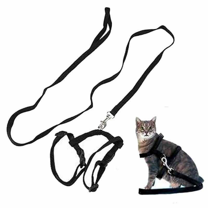 Ошейники для кошек: нужен ли, какие бывают, как выбрать, как приучить питомца, как сделать своими руками