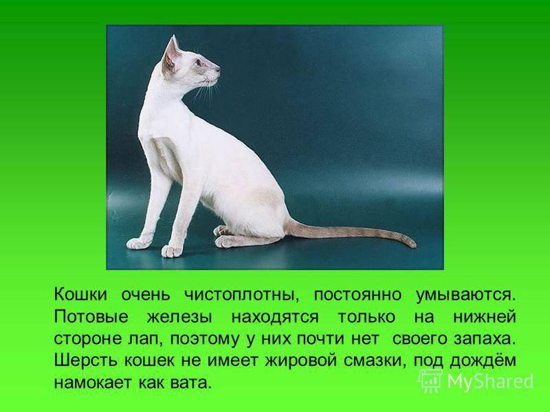 Кот воняет: причины, что делать, когда требуется к врачу