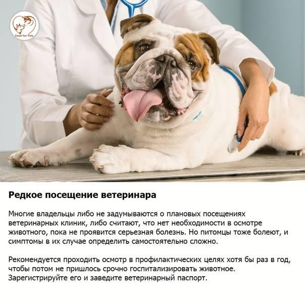 7 ошибок хозяина, которые сокращают жизнь питомцу | gafki.ru | яндекс дзен