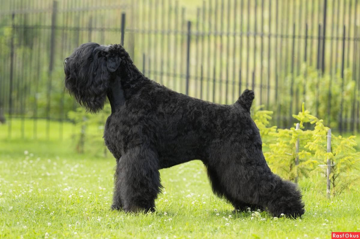 7 знаменитых пород собак, которых вывели в россии | русская семерка