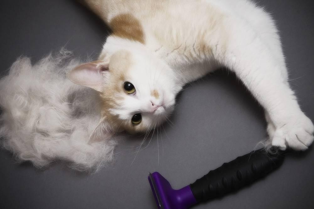 Фурминатор для кошек: что это такое?