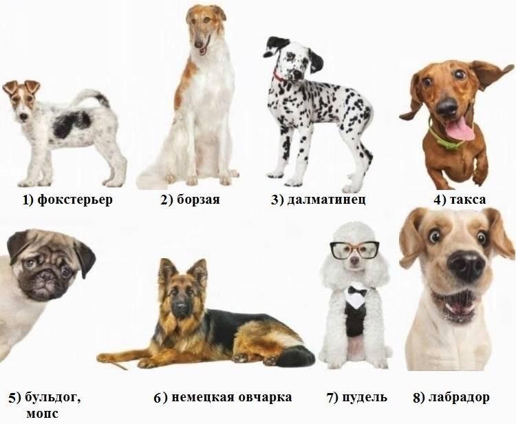 Собачки для знаков зодиака.