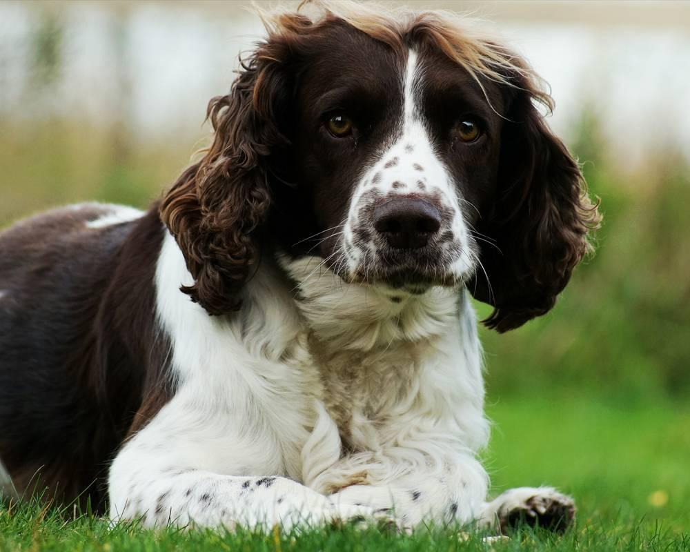 Охотничьи породы собак: обзор с фото, описанием и ценой