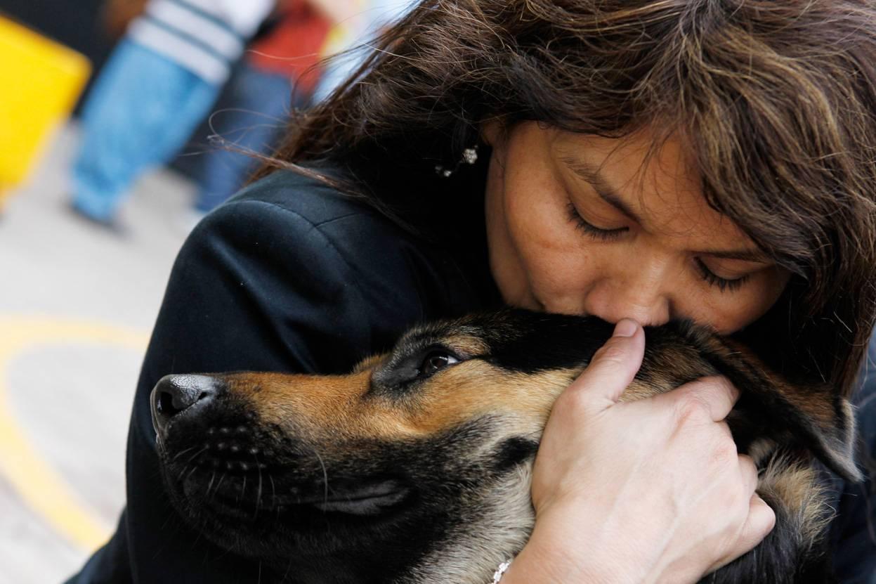 Почему собака постоянно лижет ноги хозяина: зачем она это делает, причины неадекватного поведения