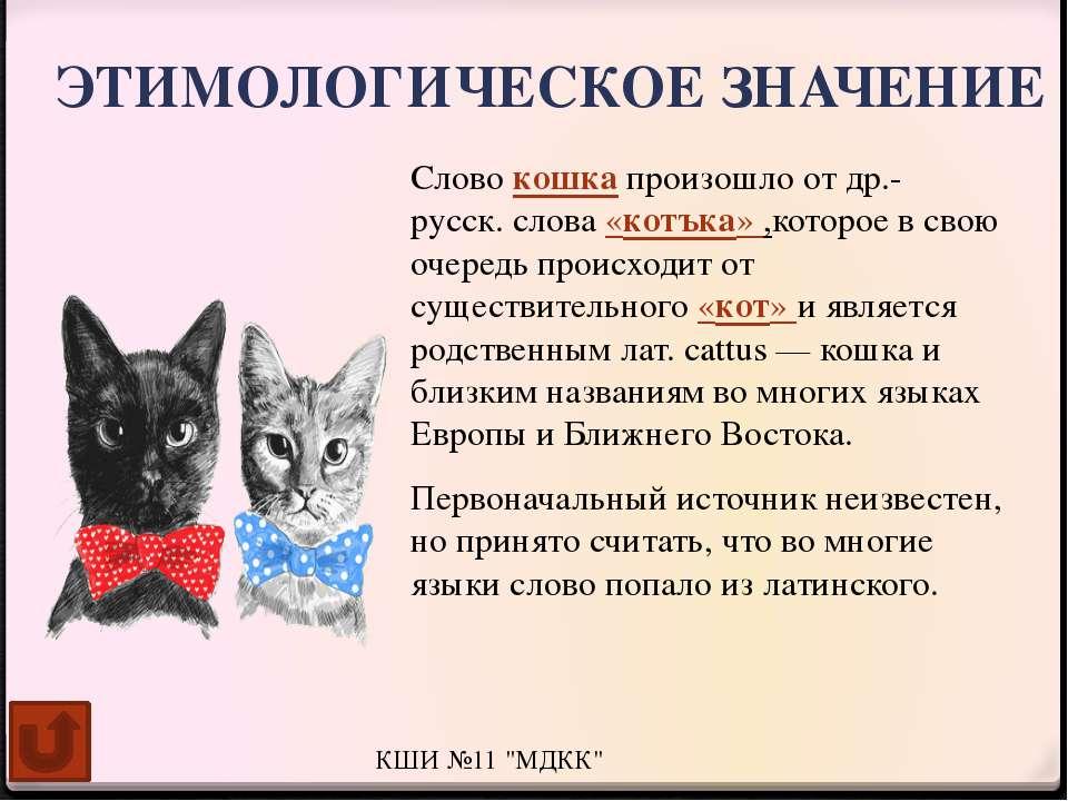 Полосатый кот: примеры пород и окраски