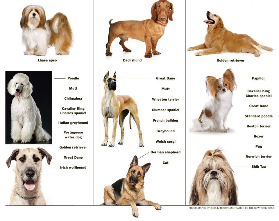 Какую породу собаки выбрать