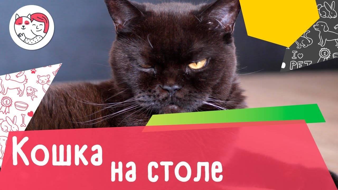 Как навсегда отучить кота лазить на стол