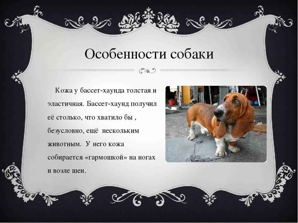 Порода собаки московский дракон фото | что говорят насекомые