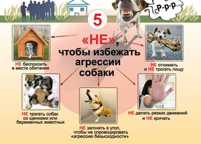 Что делать если на вас напала собака