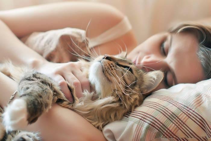 Почему кошка ложится и спит рядом с человеком