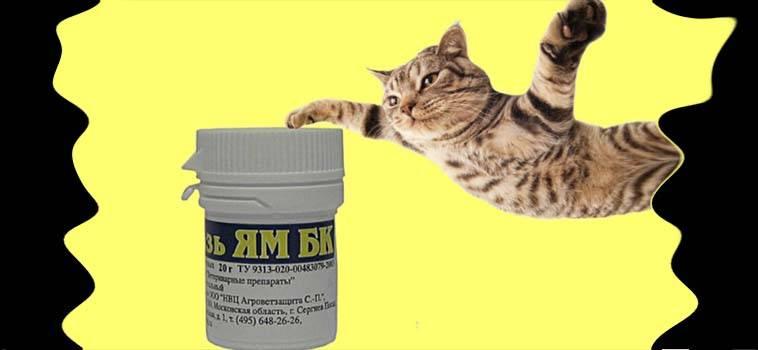 Как народными средствами вылечить лишай у кошки в домашних условиях