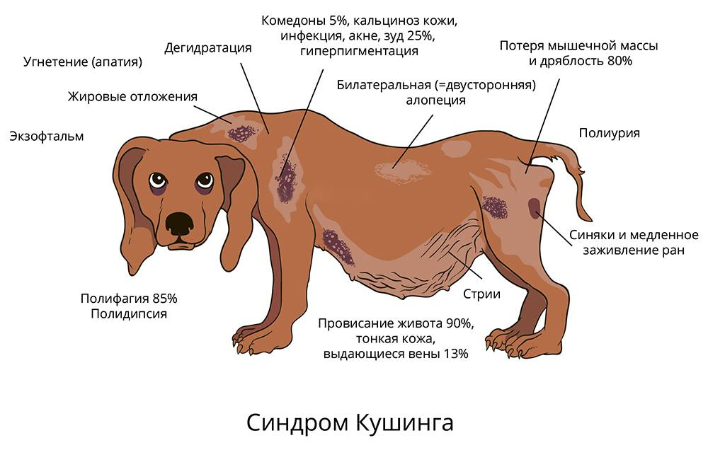 Собака тяжело дышит и хрипит: лечение хрипов при дыхании носом, почему много пьёт и пытается отрыгнуть, что делать, если не может лаять