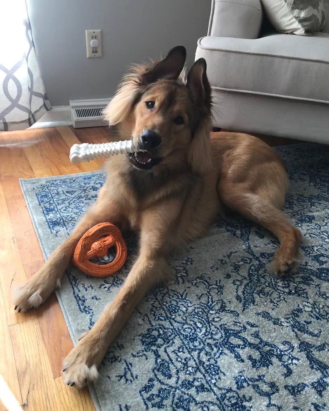Метис: порода собак, характер, уход и здоровье, болезни, кормление