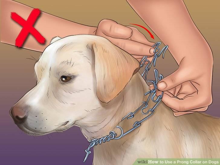 Особенности выбора и применения строгого ошейника для собак