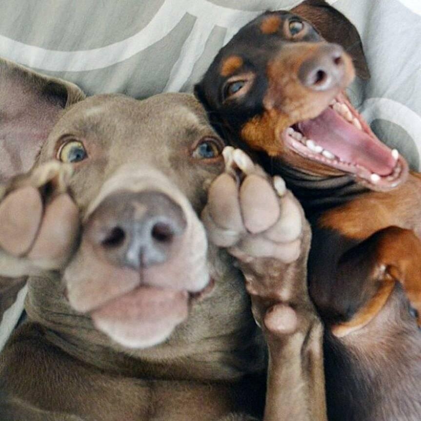 10 самых смешных животных в мире: фото