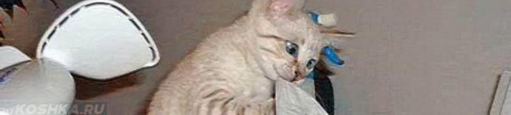 Насморк у кошки: причины, симптомы лечение