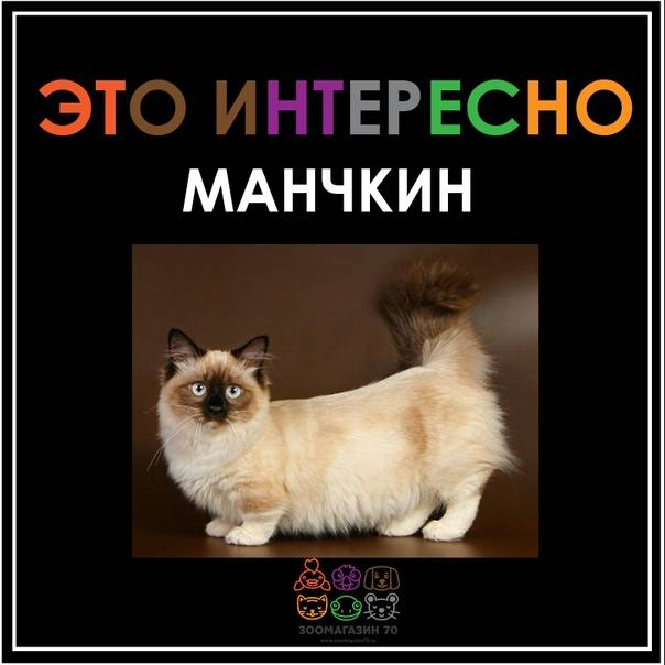 ᐉ как выбрать породу кота? - zoomanji.ru
