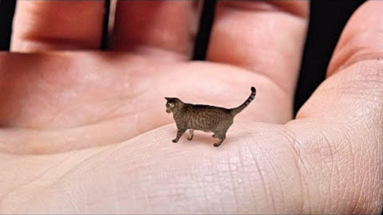 Маленькие кошки