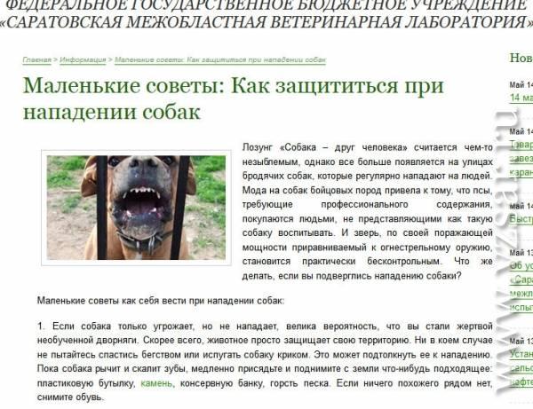 Что делать при нападении собак: подробная памятка