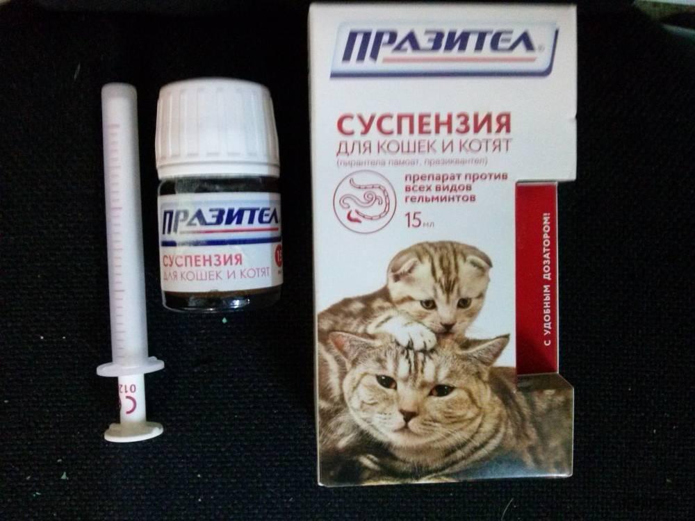 Понос у котенка: причины, симптоматика, лечение
