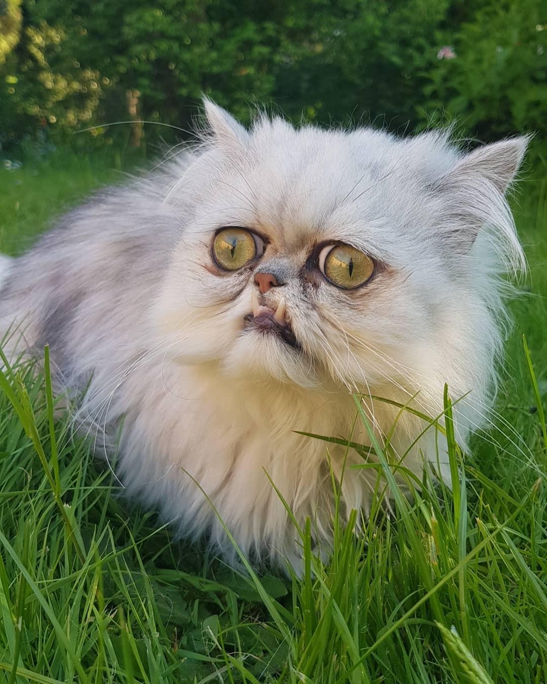 Кошки всех пород с фотографиями, названиями и особенностями характера | знать про все
