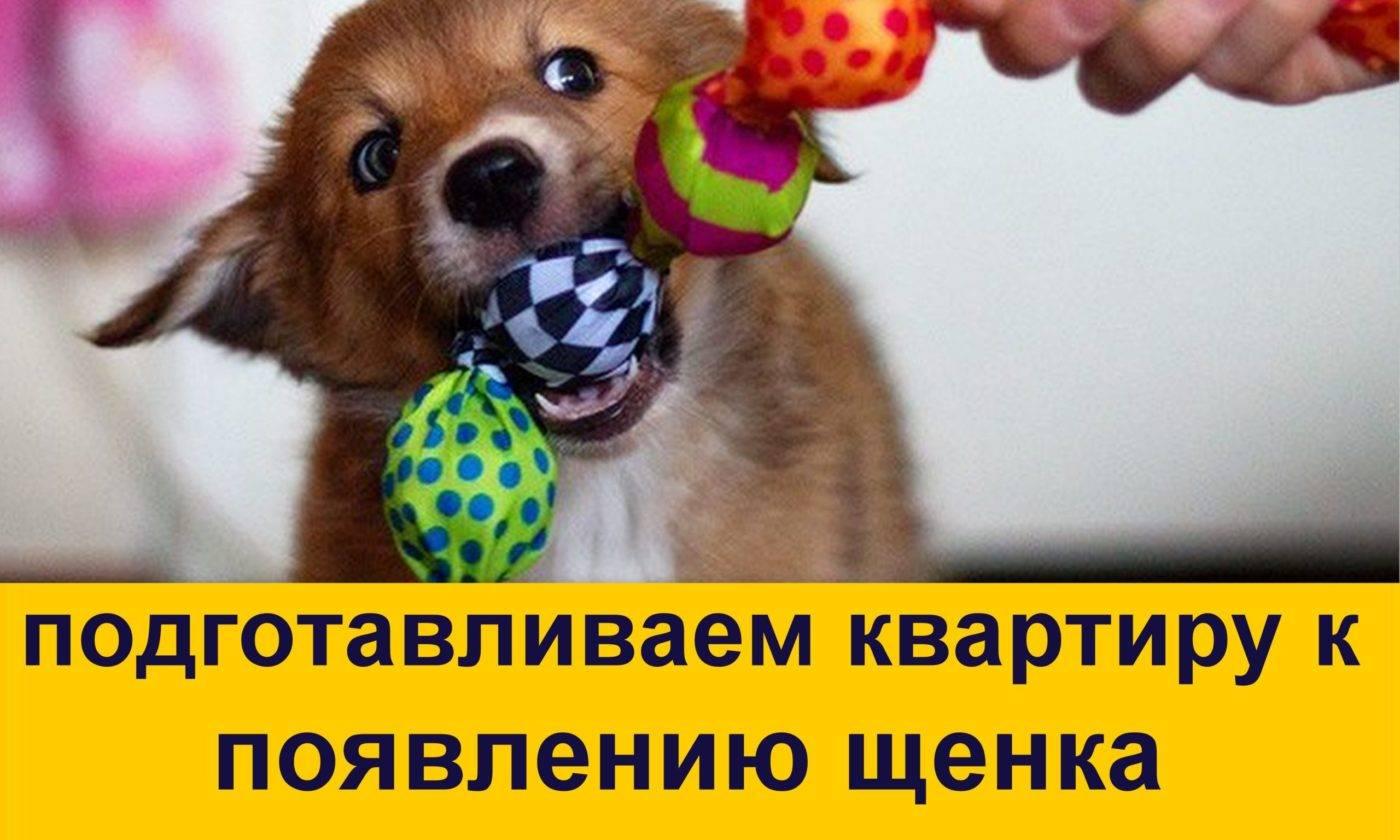 Значение алиментного щенка: юридические права и обязанности сторон в вязке