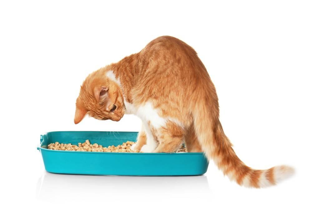 Что можно дать коту от поноса в домашних условиях: лекарства и народные методы