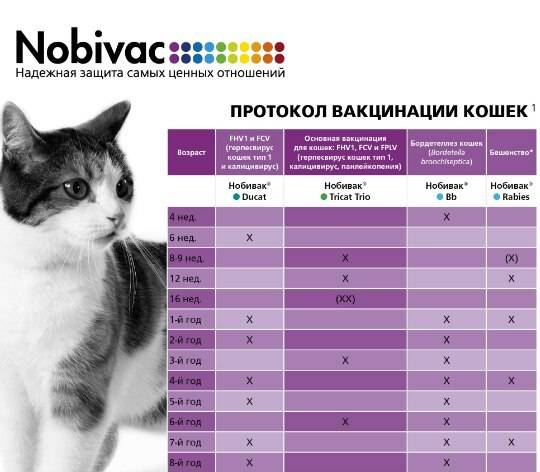 Прививки котятам: какие и когда делать, график вакцинации по возрасту