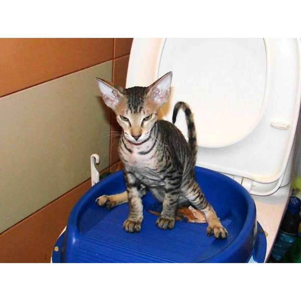 Как приручить кота с улицы: советы по одомашниванию кошек и котов