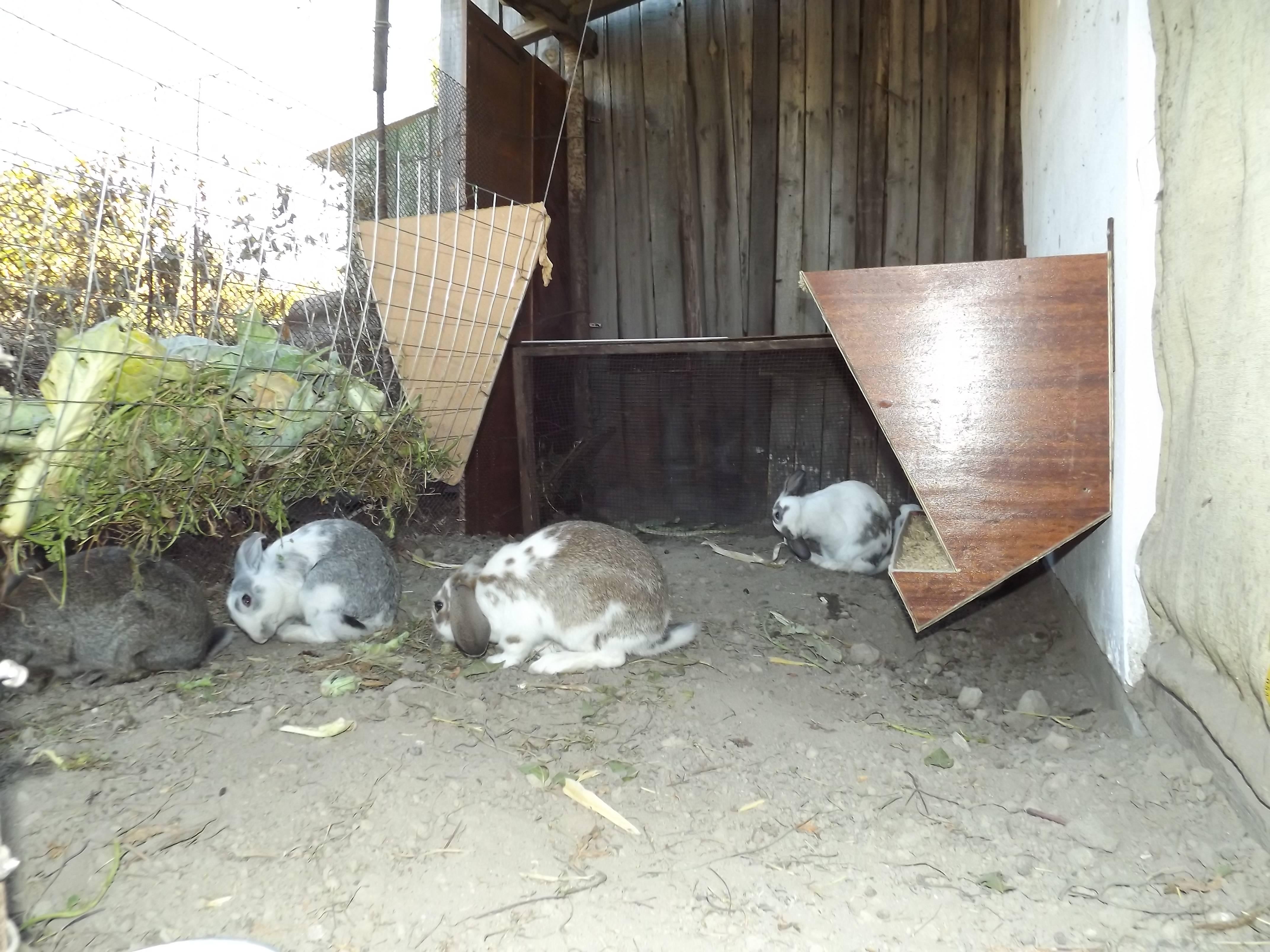 Вольерное содержание кроликов   свое хозяйство