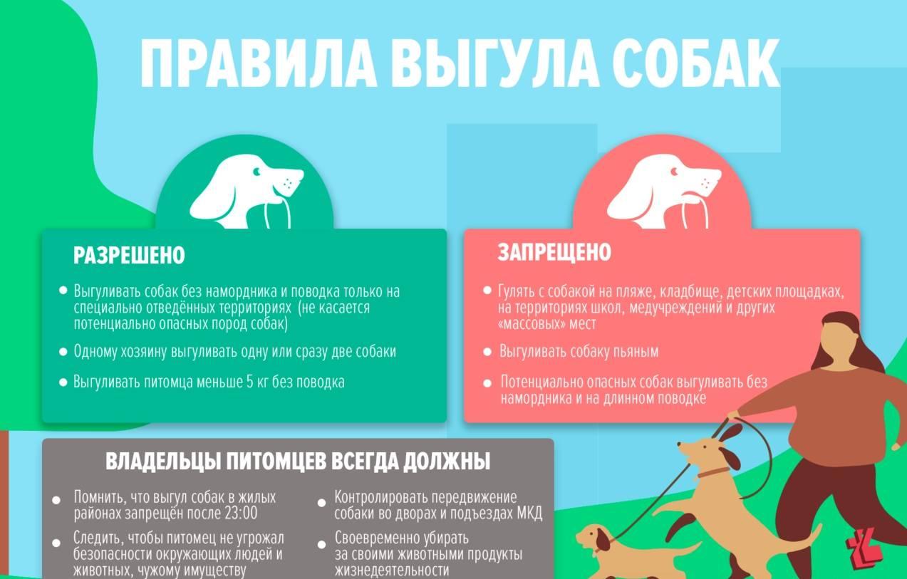 Выгул собак без намордника: правила, можно ли выгуливать, ответственность и размер штрафа