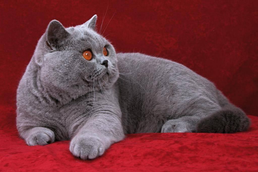 Список лучших имен для кошек и котов : самые популярные, красивые, оригинальные и смешные клички подходящие для черных, рыжих, белых, трехцветных и полосатых котов и кошек   qulady