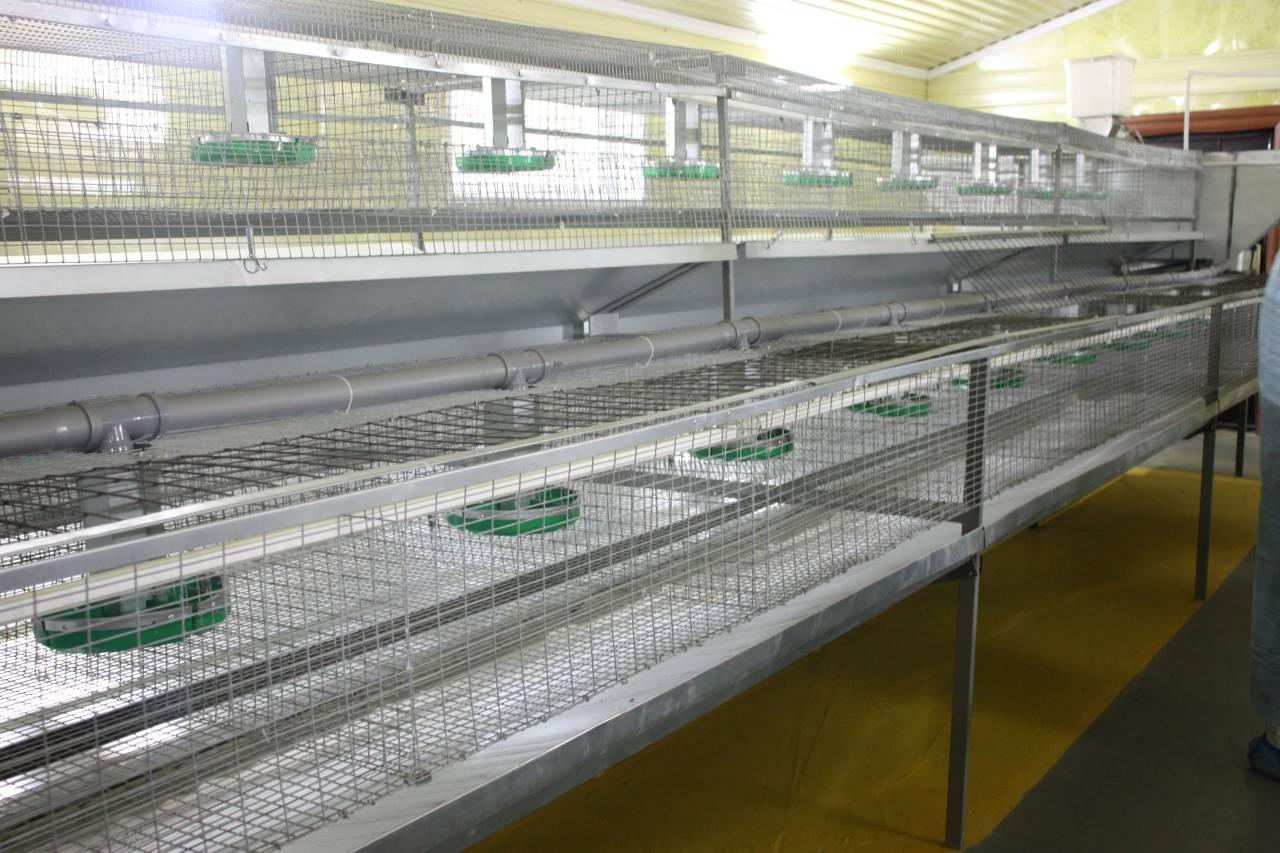 Бизнес-план по разведению кроликов на ферме и в промышленных масштабах, выгодно ли кролиководство