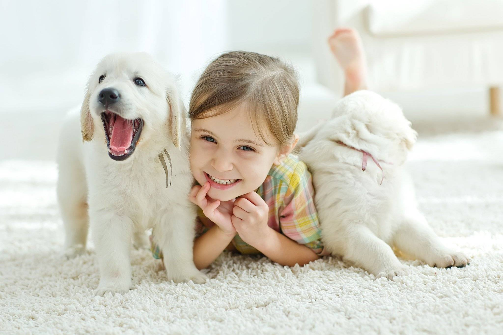 Лучшие собаки для квартиры и детей: какую породу завести | lisa.ru