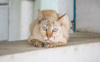 У кошки текут слюни изо рта: причины обильного слюноотделения, что делать, варианты лечения