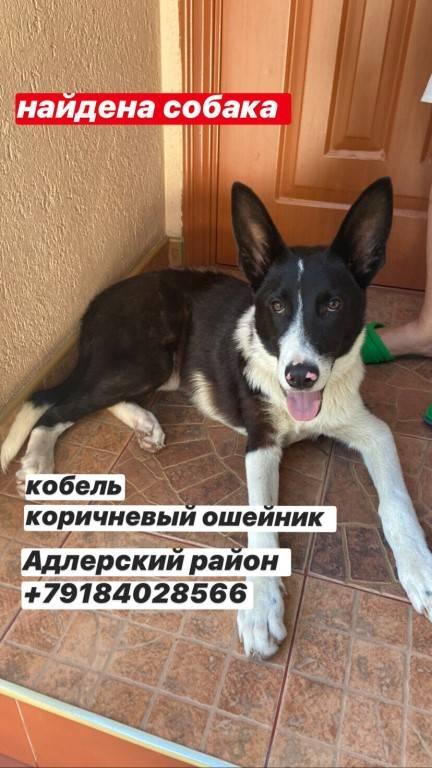 Как можно найти собаку, если она убежала