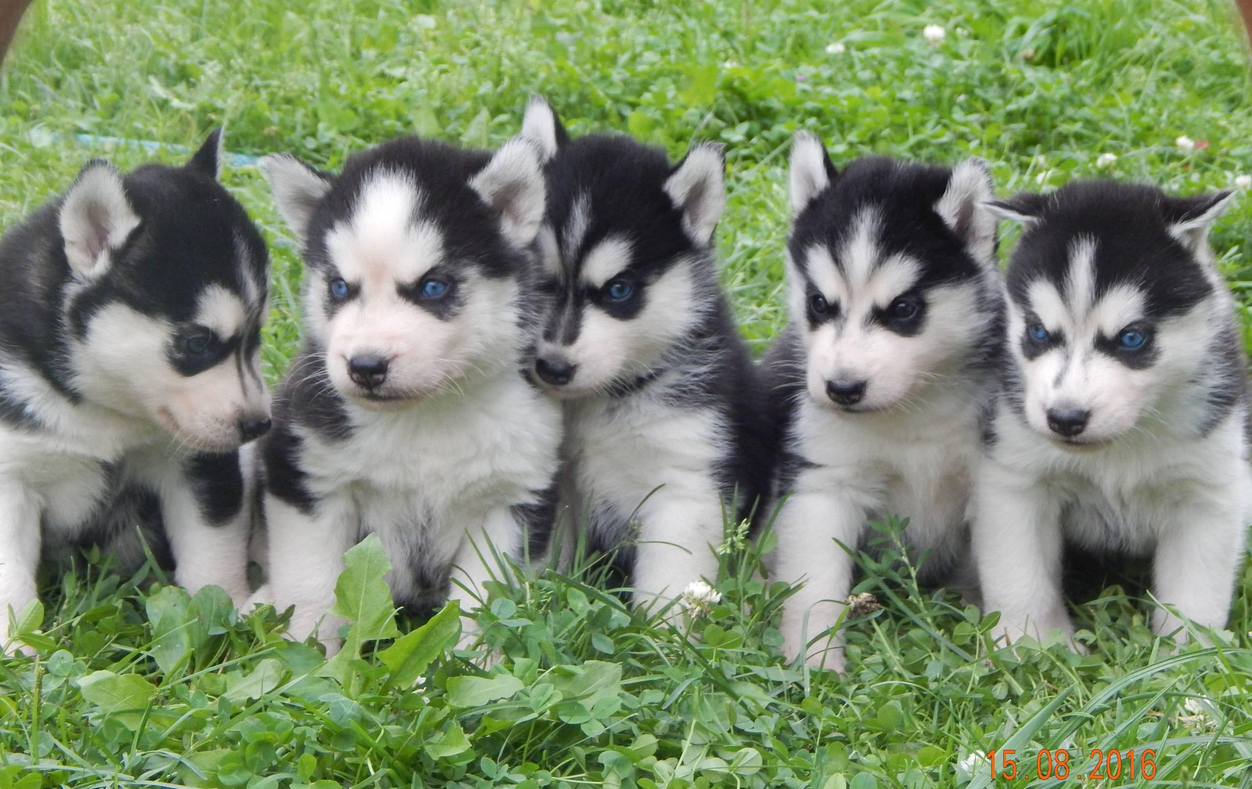 Клички для собак средних пород, имена для средних собак мальчиков и девочек.
