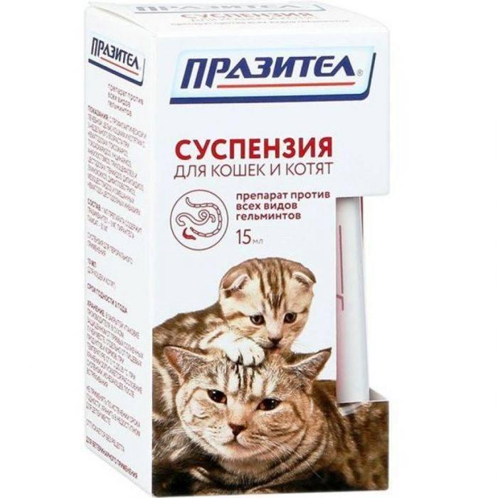 Как вывести глистов у кошки в домашних условиях – обзор современных препаратов