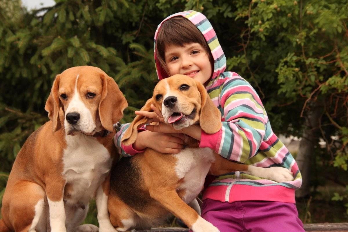 Топ-10 пород собак для небольшого дома или квартиры | полезно (огород.ru)