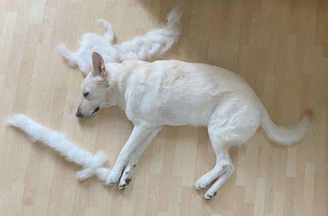 Что делать, если собака сильно линяет зимой или летом - причины и лечение 2020