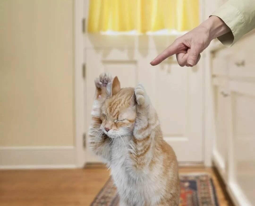 Как отучить кошку драть обои и мебель - 9 проверенных способов