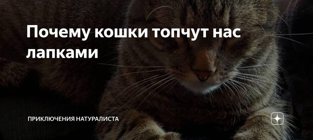 Почему кошка топчет вас лапками: основные причины такого поведения