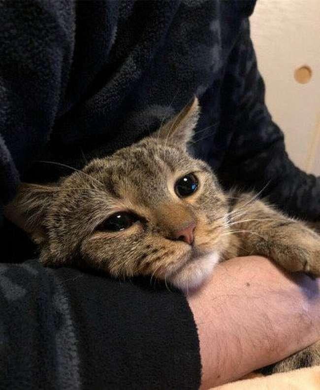Привычки кошек, которые воспитывают сами хозяева - zefirka
