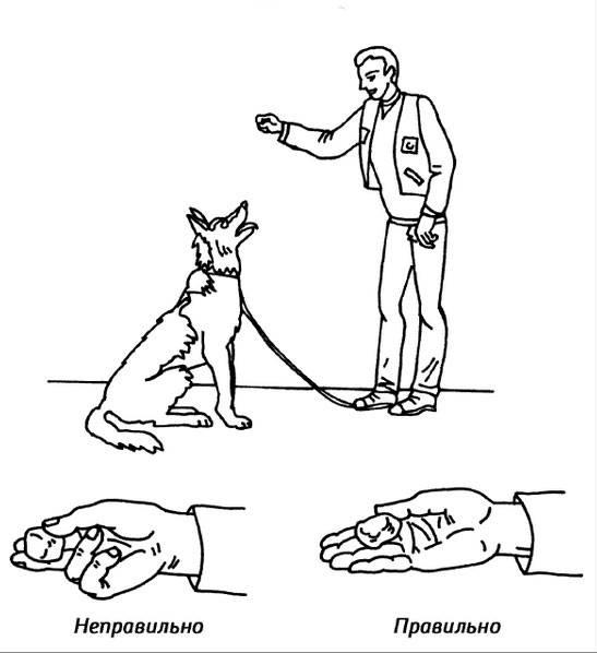 Как приучить щенка к клетке