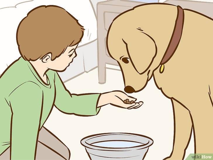 Как уговорить родителей купить собаку: 10 рабочих способов, аргументы, после которых они не смогут устоять. что нужно говорить родным?