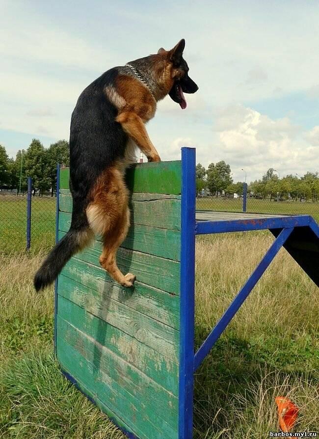 Как отучить собаку прыгать на людей и хозяина ?