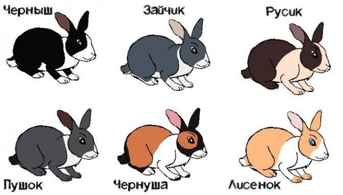 Имена для кроликов: как назвать девочек и мальчиков? какие клички можно дать кроликам белого цвета?
